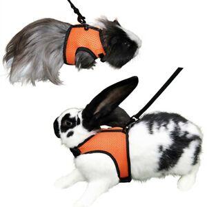 Nagergeschirr SPORT mit Leine Kaninchengeschirr Kaninchen Meerschweinchen Hasen