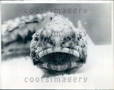 1967 Frontal View of Jawfish Press Photo