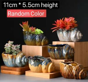 6pcs Conch Cactus Succulent Pots Clay Flower Plant pots Gloss Glaze In/outdoor