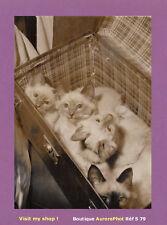 PHOTO DE PRESSE 1961 : EXPOSITION CHATS PARIS, LES CHATONS DE BIRMANIE  -S79