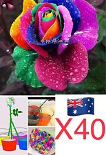 40 Seeds Rainbow Rose Roses Garden Plant Fruit Vegetable Aus Stock🇦🇺
