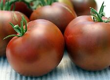 50 Seeds Nyagous Tomato Seeds Black Tomato Heirloom Garden Seed