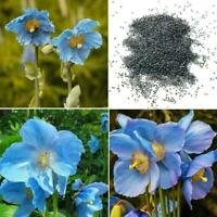 50 BLUE HIMALAYAN MOHNBLUME Tibetische Meconopsis Betonicifolia Blumensamen I0D1