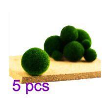 5-Pcs Nano Marimo Moss Ball-algae Live Aquarium Plant Fish Tank Supply Best 1cm