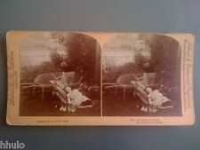 STB974 Enfant sieste chat jardin brouette stereoview photo STEREO 1890