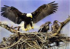 Eagle Nest - 3D Lenticular Postcard Greeting Card