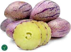 5 seeds of Purple Sweet Pepino - SOLANUM MURICATUM - Dulce + 5 seeds Sunflower