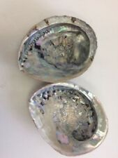 Giant Abalone Shell - 15cm+ Large Sea Shell Natural Sea Decor Mother Of Pearl