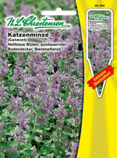 """Cataire Nepeta /""""mussinii/"""" 200 graines-Hardy vivace"""