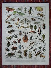 Insects..Antique print...Larousse 1900s