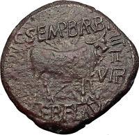 AUGUSTUS Calagurris Spain Authentic BIBLICAL Time Ancient Roman Coin Bull i60715