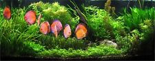 25 Live SOFTWATER Aquarium plants suitable for tropical Discus fish tank