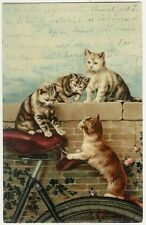 Cats, Bicycle, Cats Playing on a Bicycle, Old Postcard 1901