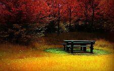 Incorniciato stampa-Picnic Bench su erba verde nell' autunno legno (foto poster arte