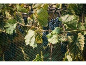 Vogelnetz verschiedene Größen Vogelschutz Netz Obstschutz Vogelnetze Gartennetz