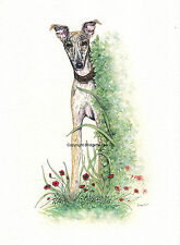 Whippet greyhound lucher  I.G dog Watercolour/ink Painting by Bridgette Lee.