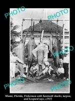 OLD 8x6 HISTORICAL GAME FISHING PHOTO OF SHARKS AND RAYS MIAMI c1925