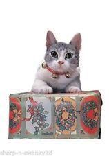 Collar de color principal rojo para gatos