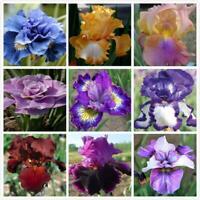 200x Iris Blume erstaunlich schöne Samen Gartenpflanze großes L4D4 NEU* T9B8