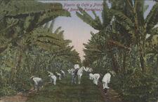 MEXICO CORDOBA PLANTIO DE CAFE Y PLATANO M.F. 2659