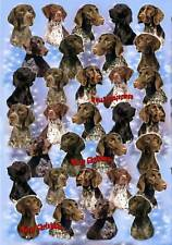 German Shorthaired Pointer Dog Xmas Paper By Starprint