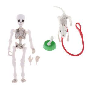 Doll House Mini 8.7cm Skeleton Doll Dog Bowl Bone Set Props Life Scenes Toy