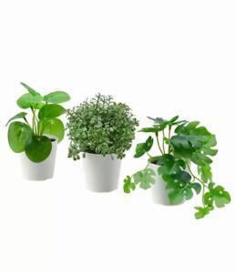 IKEA FEJKA SET aus 3 Pflanzen naturgetreue Kunstpflanzen im Töpfchen  NEU OVP