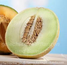 Melone Honey Rock * alte Sorte * reichtragend 5 frische Samen Balkon