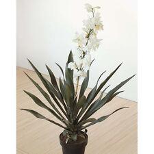 Yucca arte flor arte planta prósperas getopft 115cm