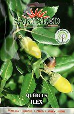 2 Semi/Seeds QUERCUS ILEX