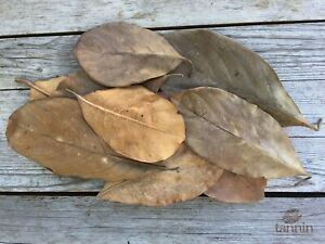 20 Dry Leaves jack fruit leaves ketapang leaf shrimp betta fish aquarium Best