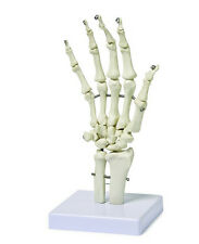 1:1 Life Size Human Hand Skeleton Model on Base Articulated Pvc New Arrival