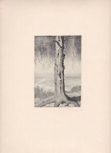 """ORIGINAL  RADIERUNG unbekannter Künstler E.K.  2. Zustand   """" ALTER  BAUM """" 1904"""