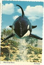 High Flying Shamu Killer Whale Sea World Amusement Park   Postcard