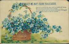 morecambe forget me not flowers 1913