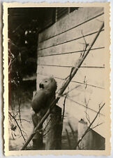 PHOTO ANCIENNE - VINTAGE SNAPSHOT - ANIMAL PERROQUET PERRUCHE ZOO - PARROT