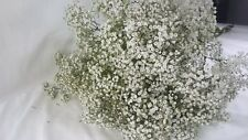 Babies Breath/Gypsophilia, Million Star, Fresh cut. DIY Filler