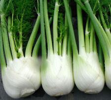 100+Florence Fennel Seeds Microgreen Microherb Garden Fresh Usa