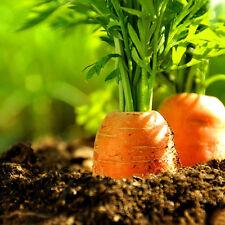 400pcs Carrot Seeds Fresh Heirloom Organic Seed-Non GMO Home Garden Vegetabble