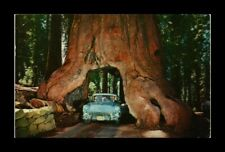DR JIM STAMPS US YOSEMITE NATIONAL PARK CALIFORNIA CHROME VIEW POSTCARD