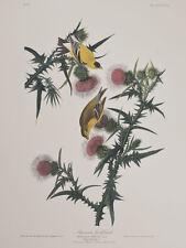 Audubon - American Goldfinch. 33 - Birds of America Abbeville Edition FOLIO