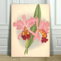 JEAN LINDEN - Beautiful Pink & Yellow Orchid #29 - CANVAS PRINT POSTER - 36x24""