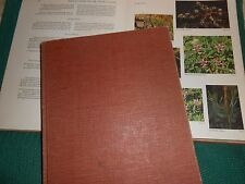 WILDFLOWERS OF THE UNITED STATES, volume 3 TEXAS Parts 1 and 2, Rickett 1st ed