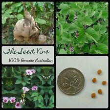 20+ INDIAN KUDZU SEEDS (Pueraria tuberosa) Ayurvedic Flower India Medicinal