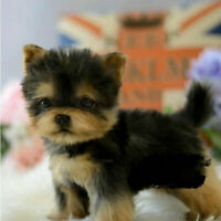 Realistic Toy Dog Handmade Simulation Cute Puppy Kids Christmas Gifts Yorkie Dog