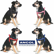 Ancol Viva Padded Strong Dog Harness - Black Red Blue Raspberry