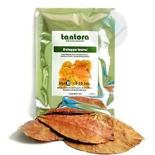 Tantora Premium Xl Catappa Leaves (10) - Indian Almond Leaves! in Usa