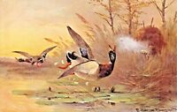SHOOTING DUCKS FROM A BLIND-ARTIST DRAWN & SIGNED HUNTING POSTCARD