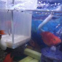 Fish Tank Aquarium Guppy Breeding Breeder Fry Net Trap Box Hatchery Hot Sale G9Z