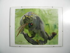 Wildkatze - Arthur Seufert * 1882-1973 - schönes altes Aquarell